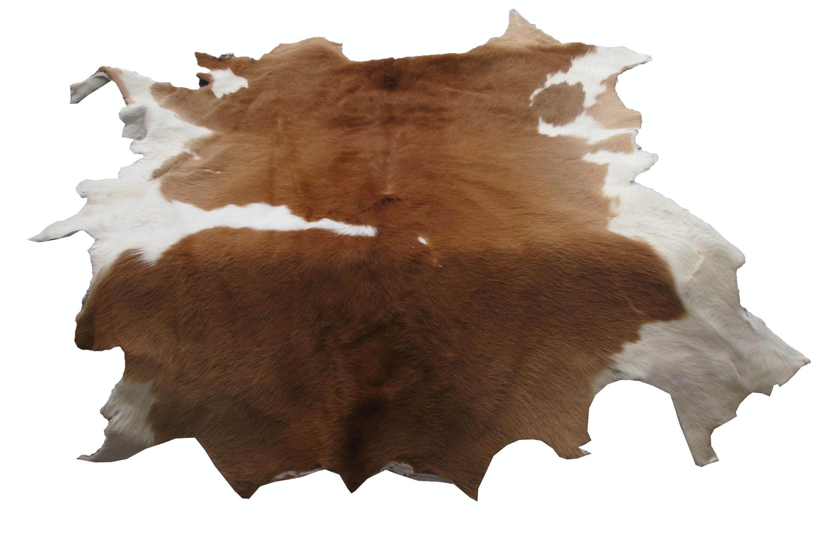 หนังแท้ หนังขนลูกวัว ใช้สำหรับตกแต่งฝาผนังบ้าน หรือ ใช้เป็นผ้าปูโต๊ะแล้วเอากระจกทับ หรือ ผ้าคลุ่มเก้าอี้นั่ง สำเนา สำเนา สำเนา สำเนา สำเนา สำเนา สำเนา สำเนา