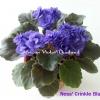 Ness' Crinkle Blue - Semiminiature