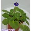 Denver Doll - Miniature