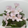 N.Thumbelina - Miniature
