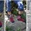 ถุงเท้าเกาหลีลายธงชาติ thumbnail 6