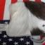 กระเป๋าสตางค์ยาว ขนวัวแท้ Style Cowboy รุ่น กระดุ่ม นิกเกอล thumbnail 5