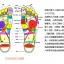 K017-SBL **พร้อมส่ง** (ปลีก+ส่ง) รองเท้านวดสปา เพื่อสุขภาพ ปุ่มเล็ก สำหรับผู้หญิง สีฟ้า ส่งคู่ละ 120 บ. thumbnail 4