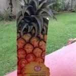 โลชั่นสับปะรด Pineapple wine Lotion
