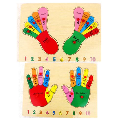 แผ่นไม้จิ๊กซอว์เรียนรู้ส่วนประกอบของมือ และเท้า